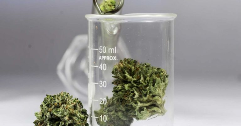 Canada Legalized Weed, and It Could Be a Huge Opportunity for Scientists