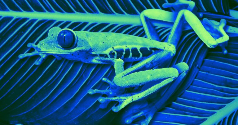 A Wearable Device Helped Frogs Regrow Their Amputated Limbs