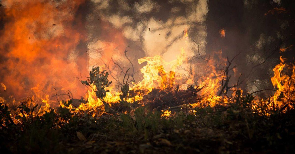 tesla wildfires bioweapon defense