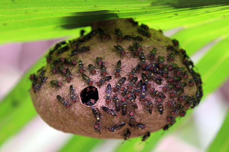 Repurposed Wasp Venom Could Lead to New Antibiotic Drugs