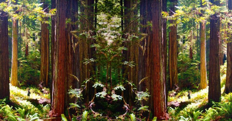 Scientists Planted Clones of Ancient Super-Tall Redwoods