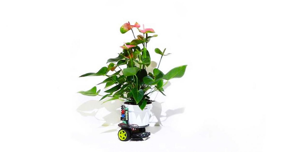 cyborg houseplant elowan