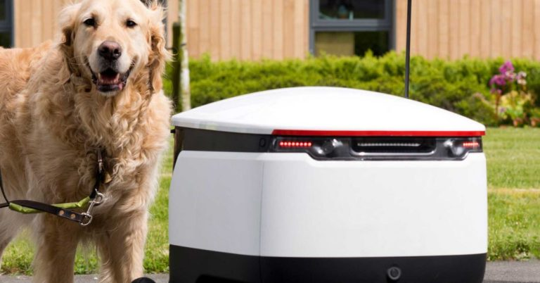 Guide Dogs Respond Better Than Some Humans to Autonomous Robots