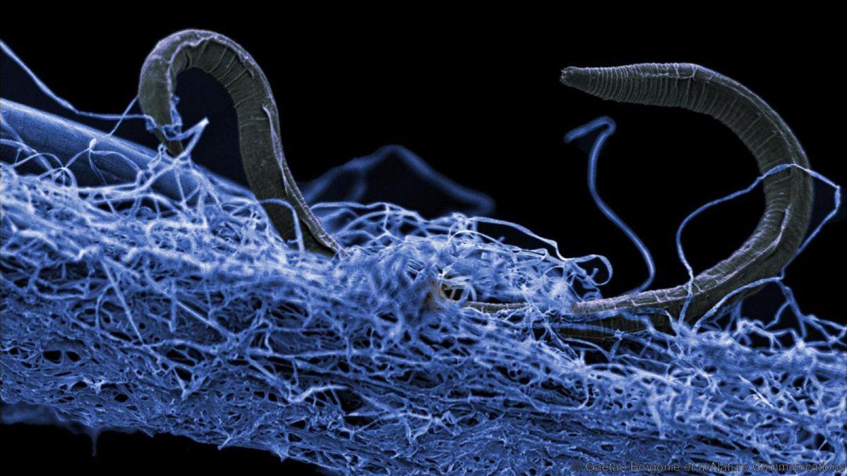 underground ecosystem life earth