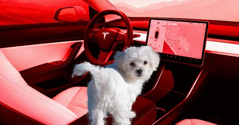 "Tesla's New ""Dog Mode"" Will Keep Canines Happy With AC, Music"