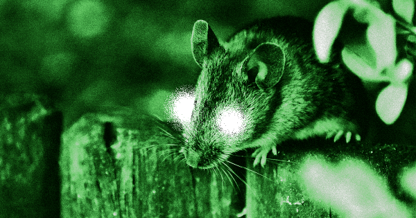 """Scientists Give Mice """"Super Vision"""" With Eye Injections"""