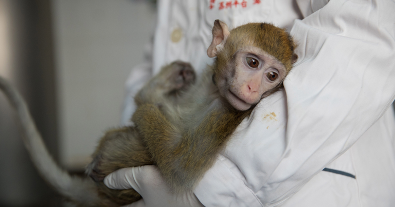 Scientist Defends Controversial Cloning of Gene-Edited Monkeys