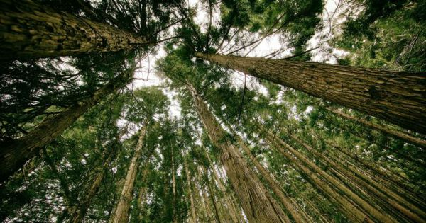 Planting Trillions of Trees Could Cancel Out CO2 Emissions