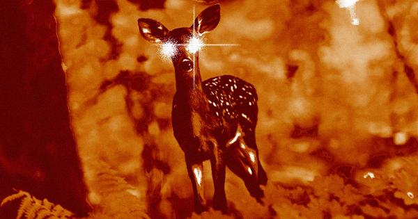 zombie deer disease spread humans